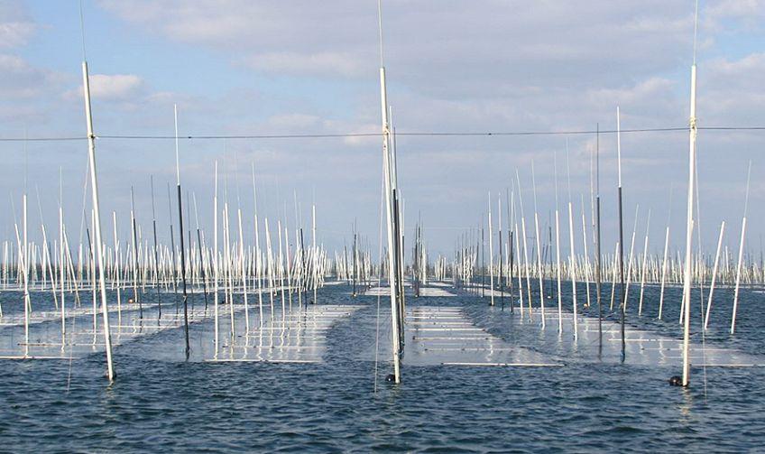 海苔の養殖(有明海)